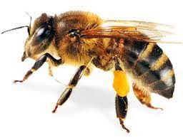Svetový deň včiel
